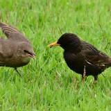Lawn Birds